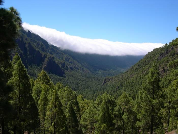 La Palma nos necesita a todos